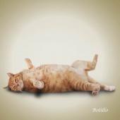 瑜伽猫挂历图片1