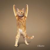 瑜伽猫挂历图片2