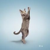 瑜伽猫挂历图片3
