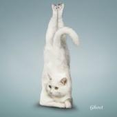 瑜伽猫挂历图片4
