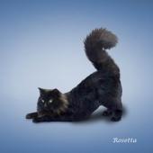 瑜伽猫挂历图片7