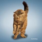 瑜伽猫挂历图片8