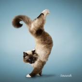 瑜伽猫挂历图片9