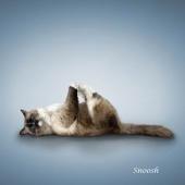 瑜伽猫挂历图片10