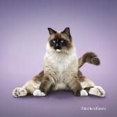 瑜伽猫挂历图片11