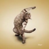 瑜伽猫挂历图片12